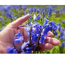 I Love Bluebells Photographic Print