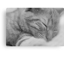 Sleeping Cat Black & White Canvas Print
