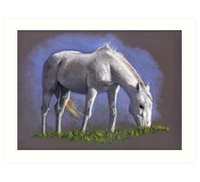 White Horse Grazing: Color Pencil Drawing of Horse Art Print