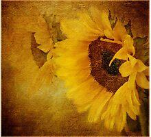 Golden Sunburst Photographic Print