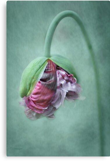 Frilly Petticoat by OpalFire