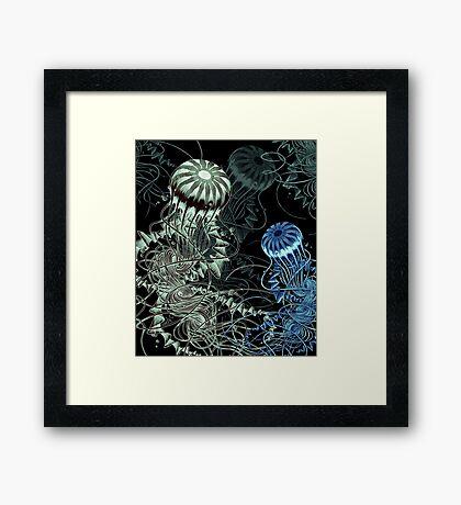 Chrysaora hysoscella (Dark) Framed Print
