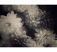 Vintage flowers B&W  Photographic Print