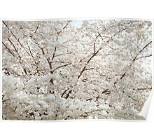 Tree In Bloom Poster