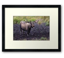 Merry Moose Framed Print