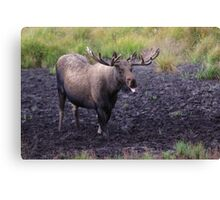 Merry Moose Canvas Print