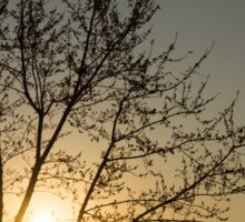 A Filigree of Branches Framing the Sunrise Sticker