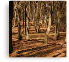 WOOD SHADOWS Canvas Print
