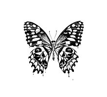 Black butterfly Photographic Print