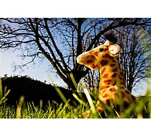 Giraffe in the Grass Photographic Print