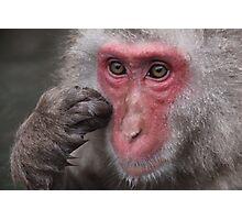 Snow Monkey Jigokudani Japan Photographic Print