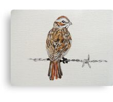 sparrow on barbed wire Canvas Print
