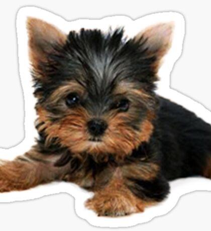 Yorkie Pup Sticker