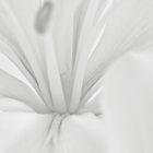 Lily Stamen Macro  by Sandra Foster