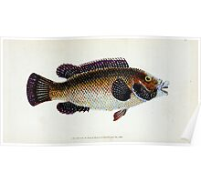 The Natural History of British Fishes Edward Donovan 1802 081 Poster