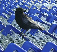 firm purchase (crow with shopping trolleys) by armadillozenith