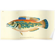 The Natural History of British Fishes Edward Donovan 1802 041 Poster