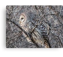 Barred Owl In A Tree Canvas Print