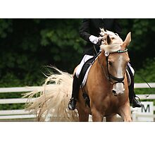 Dressage Horse Photographic Print