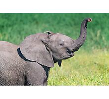 Elephant Calf Greeting Photographic Print