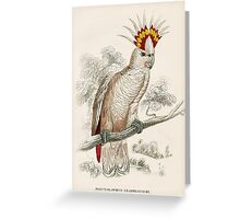 Edward Lear Parrot Prints from Natural History of Parrots  Greeting Card