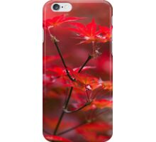 red leaves of maple iPhone Case/Skin