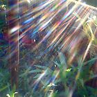 Rainbows in a Spider Web by MardiGCalero