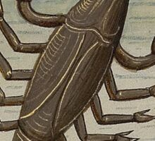 Cancer 15th Century Painting Sticker