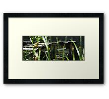 Bunga Haven's Lost Jetty Framed Print