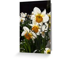 Narcissi Greeting Card