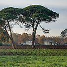 Vista on vineyards at Leognan by 29Breizh33