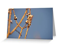 """Pussy willow""  Greeting Card"