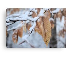 Snowy Leaf Close-up (winter snow scene) Metal Print