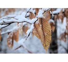 Snowy Leaf Close-up (winter snow scene) Photographic Print