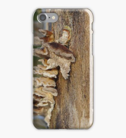 Bark Fungus On Tree Trunk iPhone Case/Skin