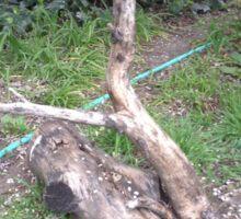 The Tall Log Caressed His Fallen Log Friend Sticker