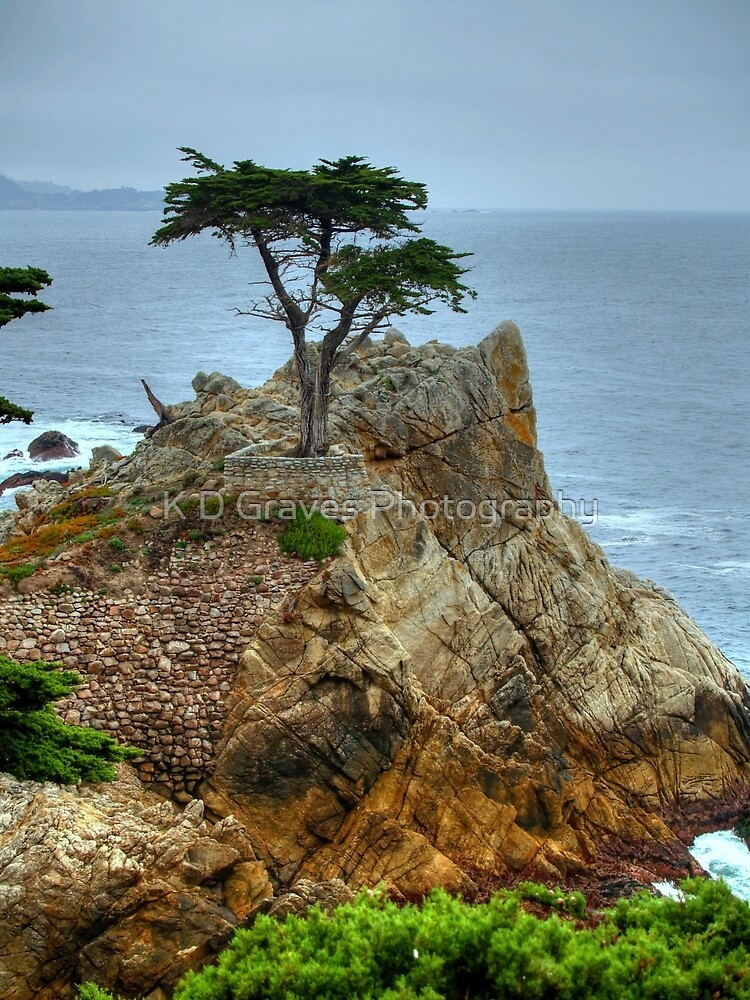 The Lone Cypress Along 17-Mile Drive by K D Graves Photography