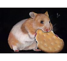 Hamster Goldhamster Photographic Print