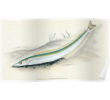 The Natural History of British Fishes Edward Donovan 1802 049 Poster