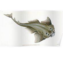 The Natural History of British Fishes Edward Donovan 1802 037 Poster