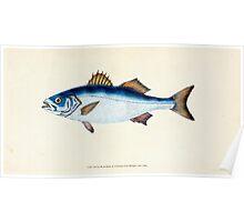 The Natural History of British Fishes Edward Donovan 1802 024 Poster