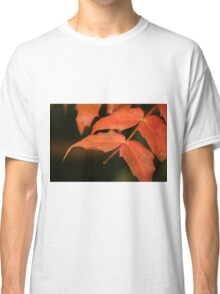 Red leaves in Autumn Classic T-Shirt