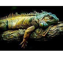 lizard face edmonton zoo Photographic Print