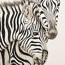 Zebra by JulieWickham