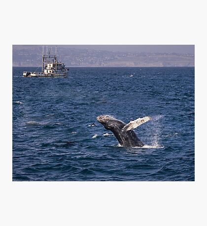 Humpback whale breaching Photographic Print