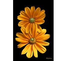 Double Daisy Delight  Photographic Print