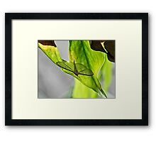 NS Resting Unknow Wings© Framed Print