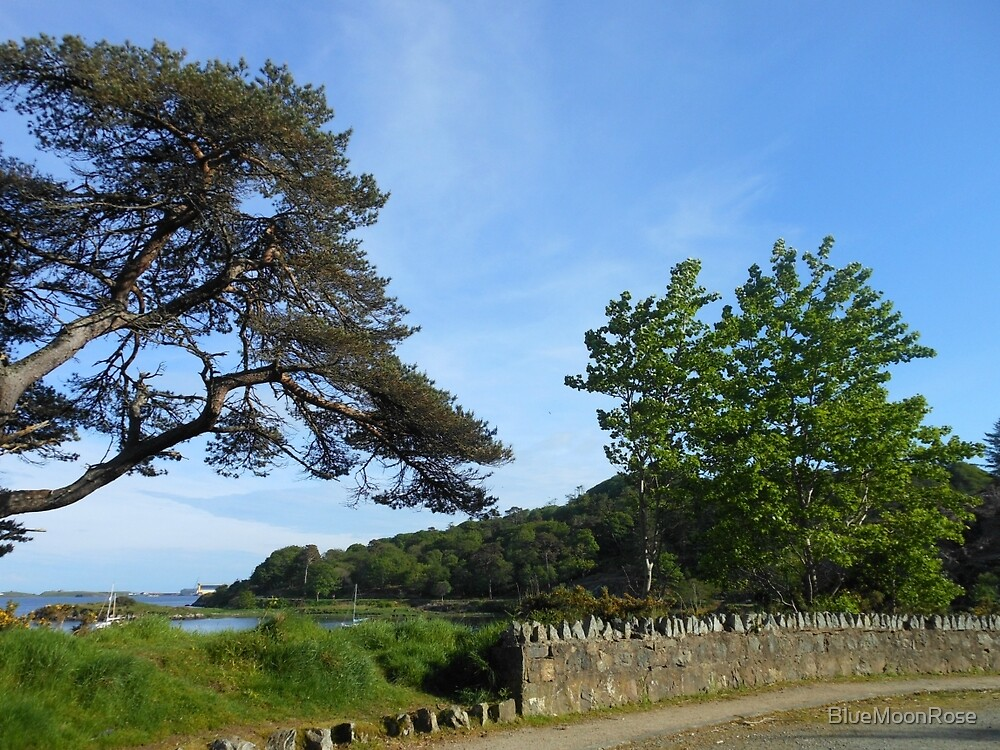 Late Spring in Stornoway by BlueMoonRose