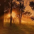 Outback Sunrise by wallarooimages