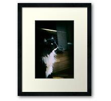 Chiaroscuro cat Framed Print